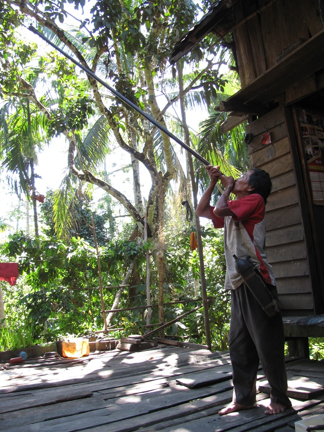 Eco Hapakat Foundation Dayak with blow pipe in Tumbang Naan